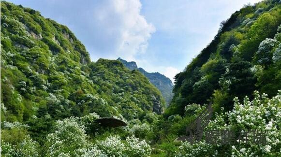 景区内有一条全长余公里的大峡谷智慧谷, 谷内溪水潺潺,山峰耸奇叠翠。  山野菜、野果、野生蘑菇、 中草药与天然植物漫山遍野,小动物种类繁多。   门票:免费 地址:北京市密云区北石城乡黄峪口村 乘车路线:东直门乘坐980路,密云换密65路至二道沟村, 步行前往。 自驾路线:从三元下京密路到密云, 向密云水库方向到西弯子叉路口西行即到。 全国制冷行业技术QQ总群及各省分中心群
